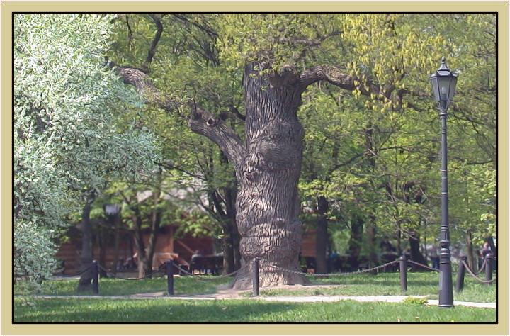 """photo """"Park etude"""" tags: landscape,"""