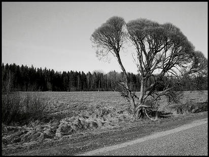 """фото """"Common Roadside Landscape"""" метки: пейзаж, путешествия, Европа, весна"""