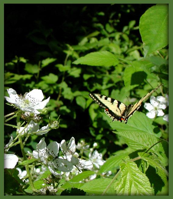 """фото """"Leaving"""" метки: природа, насекомое, цветы"""