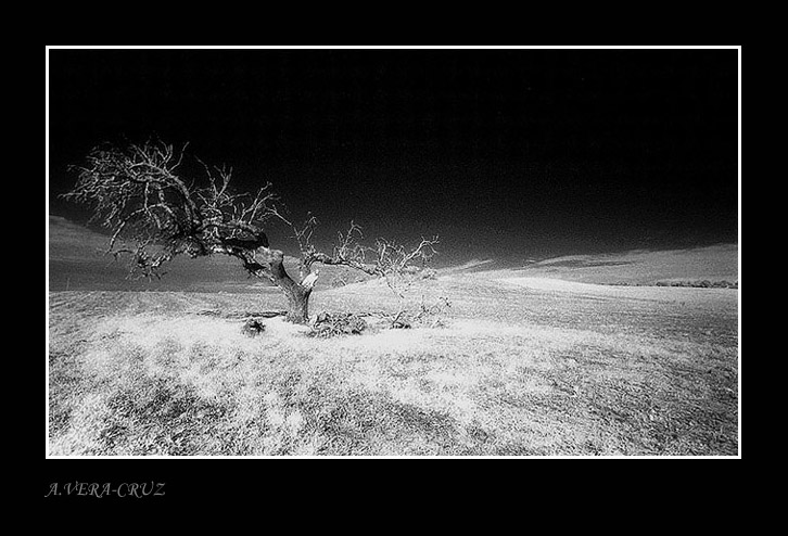 """фото """"The Old Cork Tree"""" метки: пейзаж,"""