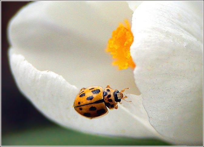 """фото """"Овальная композиция"""" метки: природа, насекомое, цветы"""
