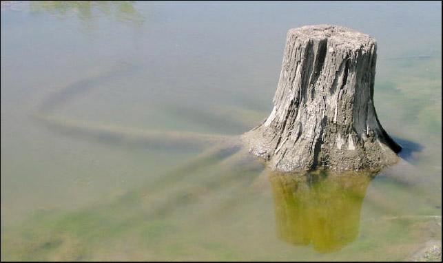 """фото """"Трон для Водяного ."""" метки: пейзаж,"""