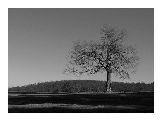 """фото """"Alone"""" метки: пейзаж, природа, лес"""