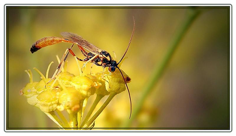 """photo """"ANTENNAS2"""" tags: nature,"""
