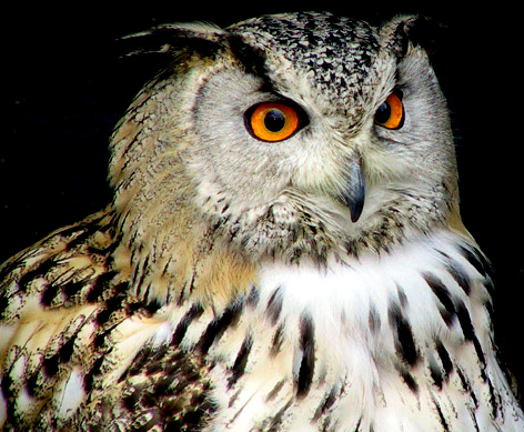 "photo ""Eagle Owl"" tags: nature, portrait, wild animals"