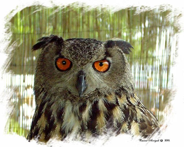 "photo ""Meet BO"" tags: nature, portrait, wild animals"
