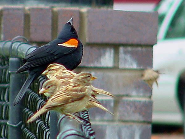 "фото ""One decided four still on the fence"" метки: природа, юмор, дикие животные"
