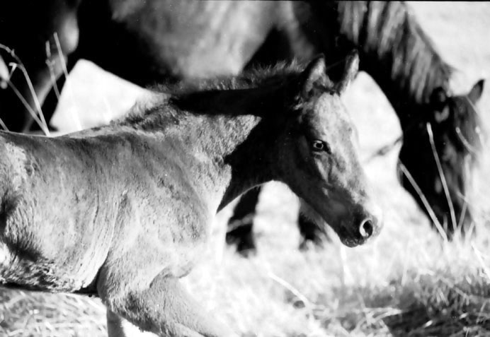 """фото """"Horses"""" метки: разное,"""