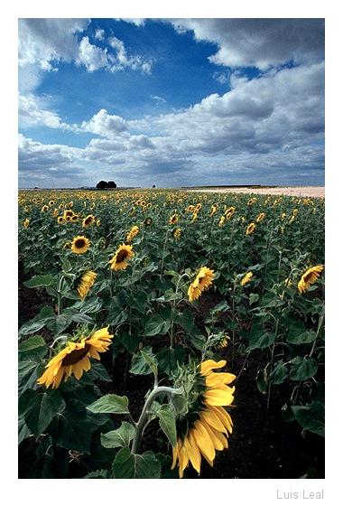 "photo ""Around the Sun"" tags: misc.,"