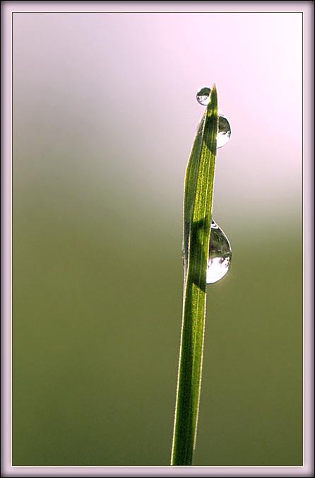 """фото """"Мал, мала, меньше"""" метки: природа, макро и крупный план, цветы"""