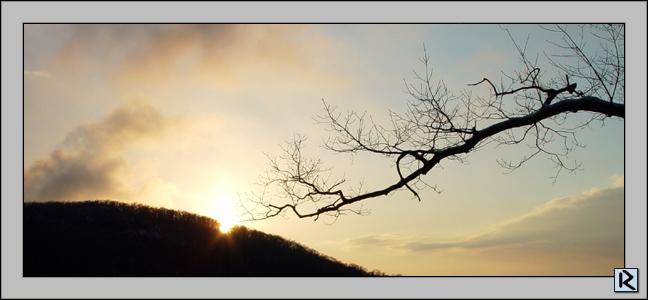 """фото """"Black lightning"""" метки: природа, пейзаж, весна, цветы"""