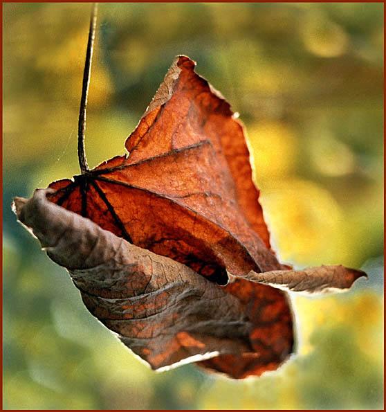 """фото """"Последний лист."""" метки: природа, пейзаж, осень, цветы"""