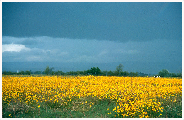 "photo ""Yellow landscape"" tags: landscape, spring"