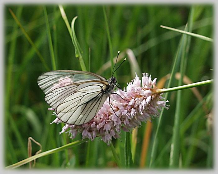 """фото """"Фея, с прозрачными крыльями"""" метки: макро и крупный план,"""