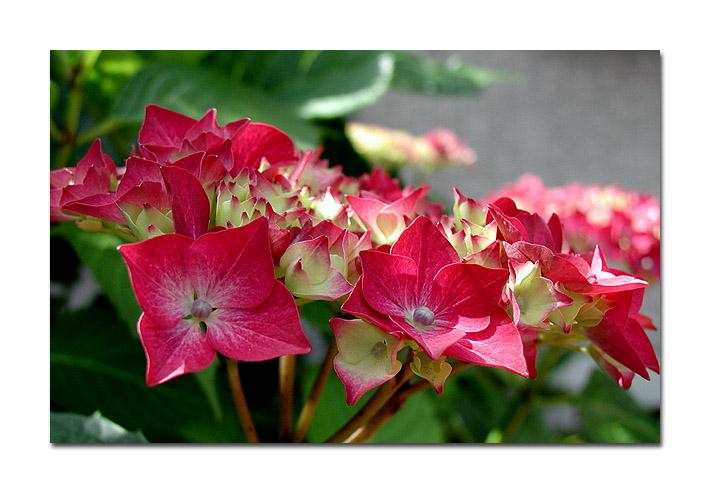 "фото ""Flowers for a Lady."" метки: природа, цветы"
