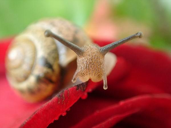 """фото """"Активная антенна"""" метки: макро и крупный план, природа, насекомое"""