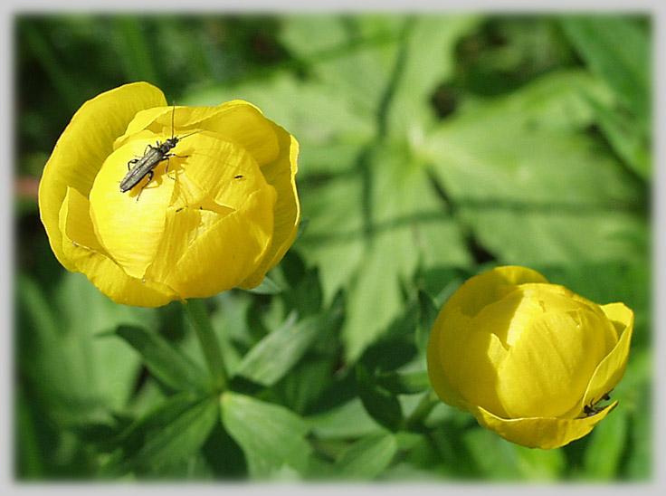 """фото """"Этот мир мой..."""" метки: макро и крупный план, природа, насекомое"""