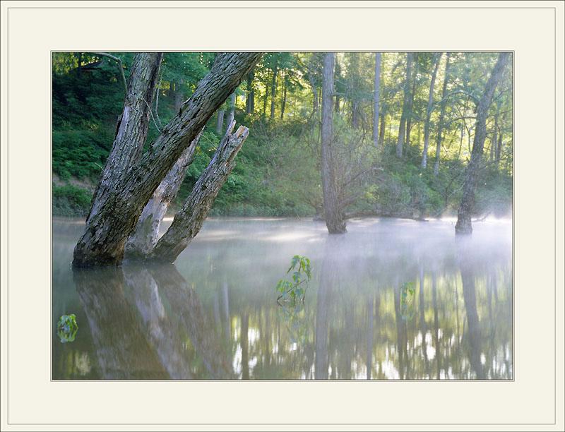 "фото ""Many shades of green....(Morning)"" метки: пейзаж, лес"