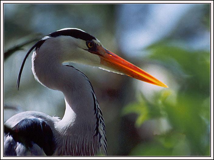 "photo ""One bird portrait"" tags: nature, wild animals"