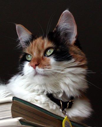 """фото """"Misty"""" метки: природа, домашние животные"""