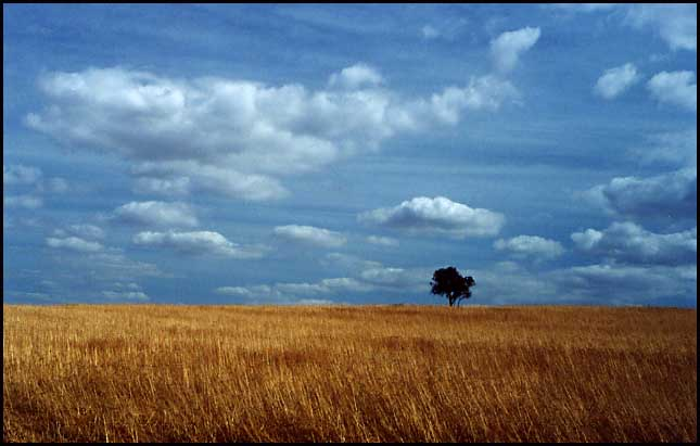 "фото ""Loneliness"" метки: пейзаж, весна"