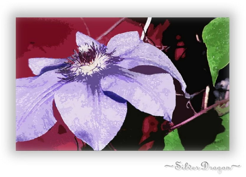 "photo ""Purple On Red"" tags: nature, montage, flowers"
