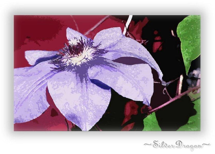 """фото """"Purple On Red"""" метки: природа, фотомонтаж, цветы"""