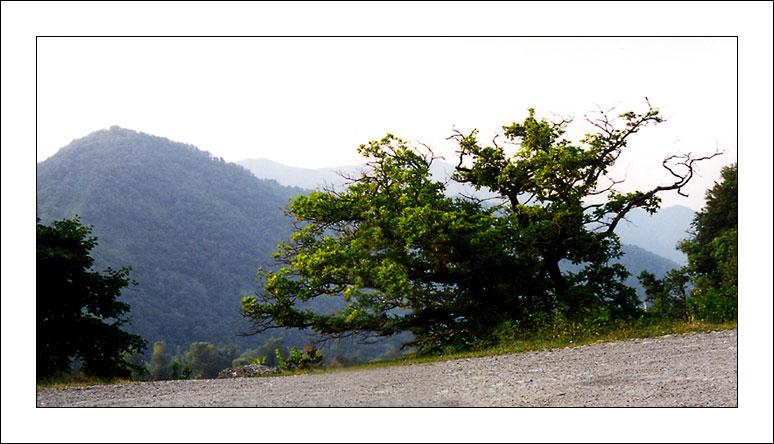 """фото """"Вспоминающий молодость..."""" метки: пейзаж, природа, горы, цветы"""