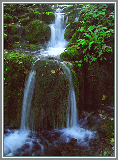 "фото ""Раздвоение"" метки: пейзаж, вода, лес"