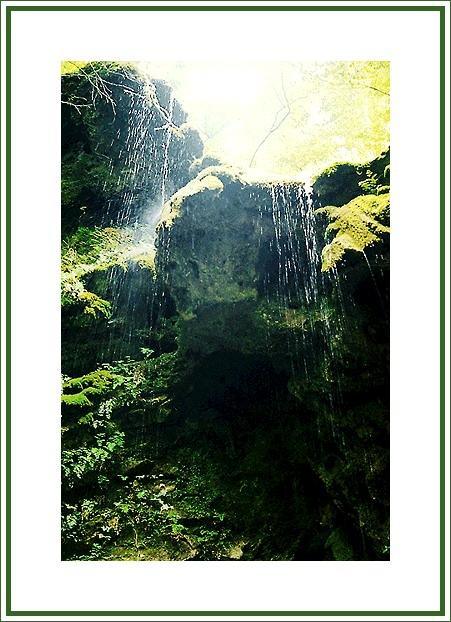 "photo ""Solar rain"" tags: landscape, forest, water"