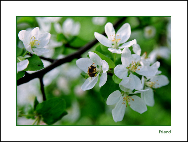 "фото ""It`s spring again!"" метки: природа, цветы"
