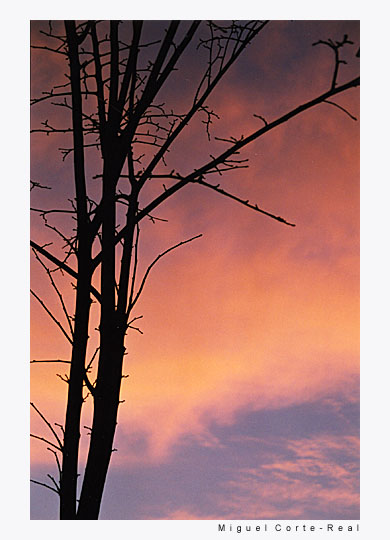 "фото ""always"" метки: пейзаж, природа, закат"