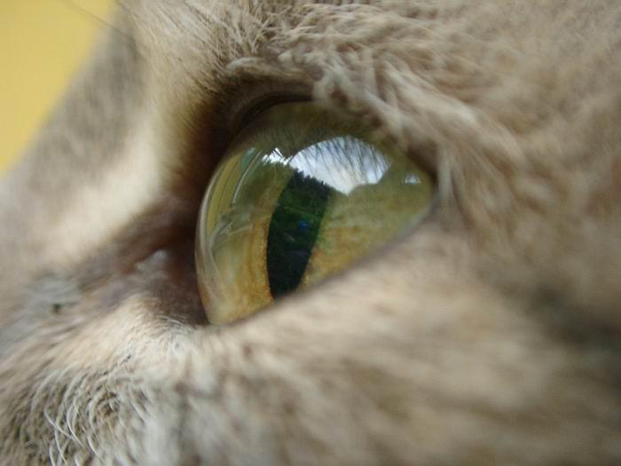 """фото """"""""Бездна"""""""" метки: макро и крупный план, природа, домашние животные"""