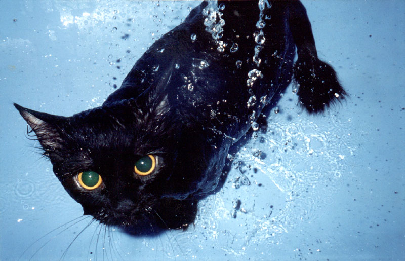 "photo ""Bath time"" tags: nature, humor, pets/farm animals"