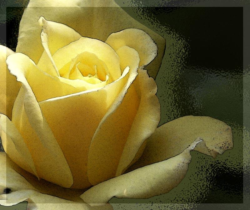 """photo """"Peer Gynt #2"""" tags: nature, flowers"""