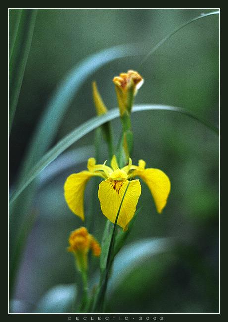 """фото """"Цветок в траве"""" метки: природа, цветы"""