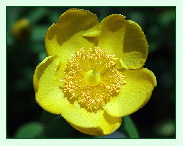"""фото """"ЖАРА"""" метки: природа, макро и крупный план, цветы"""