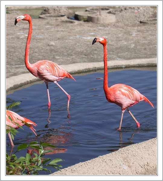 "фото ""Розовые на голубом"" метки: природа,"