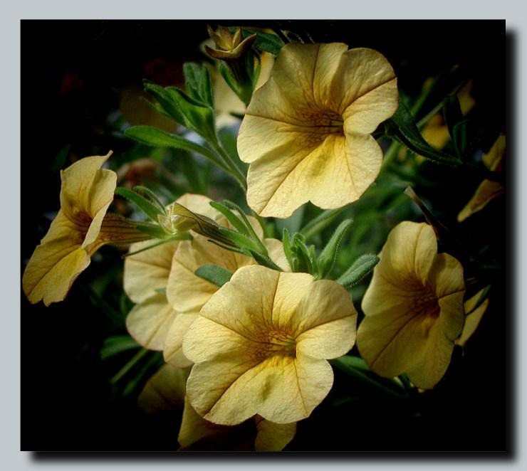 "фото ""And I saw the Seven Angels ..."" метки: природа, макро и крупный план, цветы"