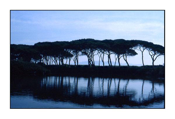 "фото ""Quiet Silence"" метки: пейзаж, лес"