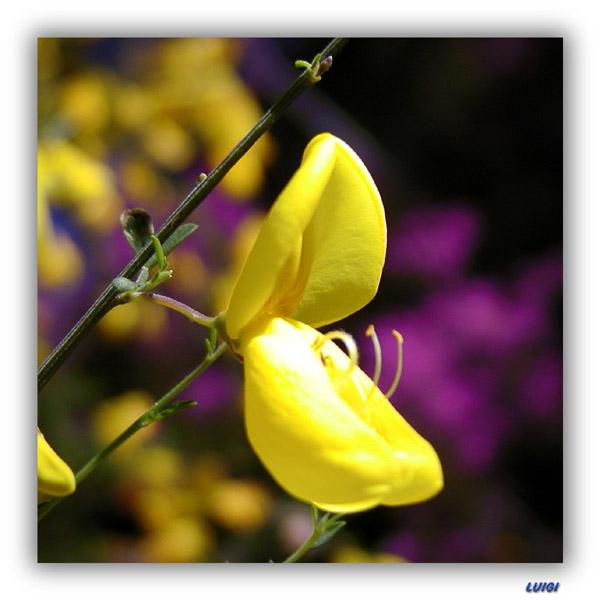 "фото ""Yellow from Nature"" метки: природа, цветы"