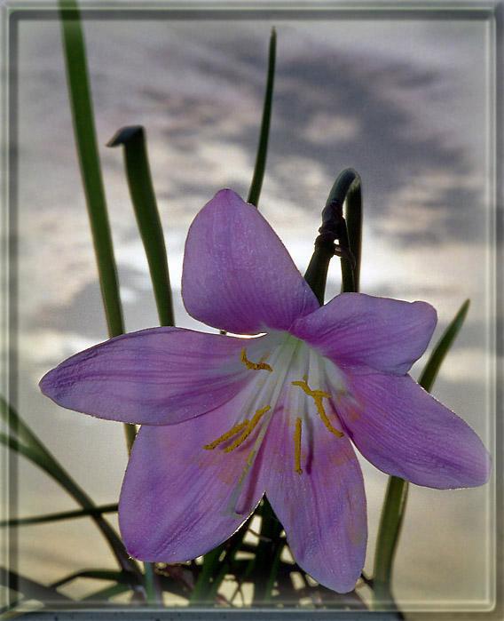 """фото """"Цветочная зарисовка"""" метки: природа, макро и крупный план, цветы"""