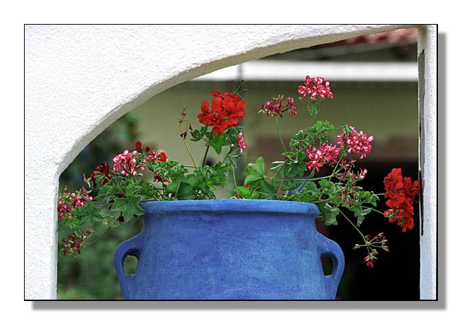 """фото """"Обыкновенные цветочки..."""" метки: природа, натюрморт, цветы"""