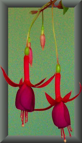 """фото """"Детство и зрелость"""" метки: макро и крупный план, природа, цветы"""