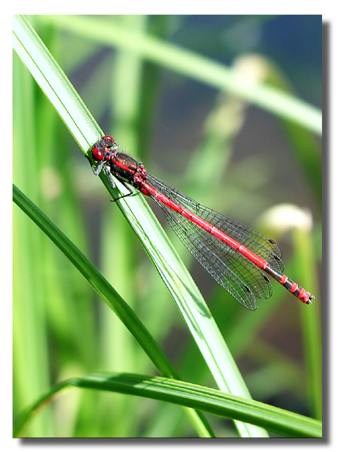 "photo ""Pretty"" tags: nature, insect"