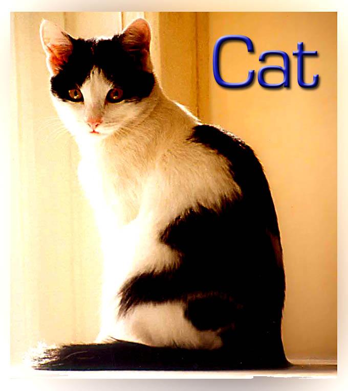 """фото """"Cat"""" метки: природа, домашние животные"""