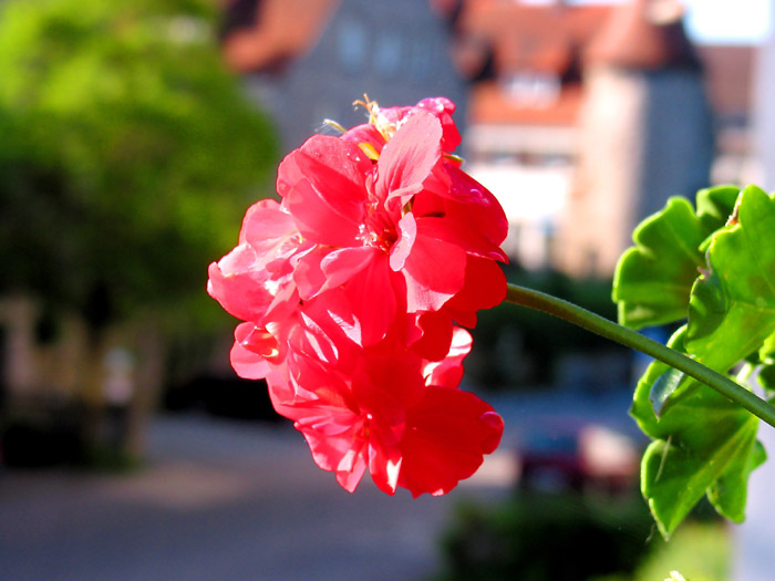 "photo ""On a balkony in the morning..."" tags: montage, nature, flowers"