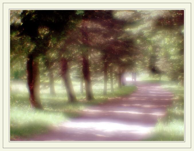 "фото ""*****"" метки: пейзаж, лес, лето"