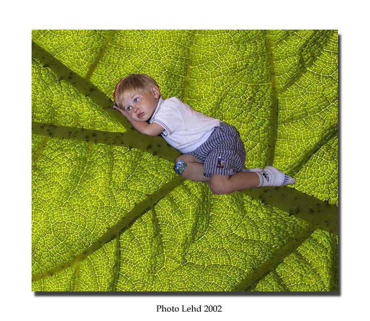 """photo """"My flowerboy"""" tags: montage, portrait, children"""