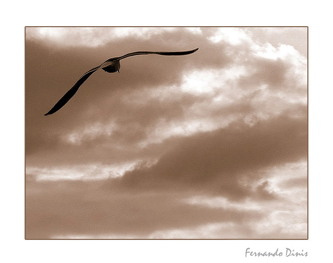 "photo ""It frees"" tags: nature, genre, wild animals"